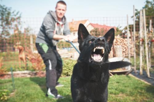 prevención de mordeduras de perro