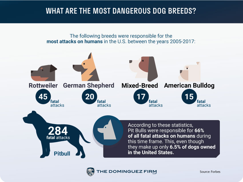 What Are The Most Dangerous Dog Breeds